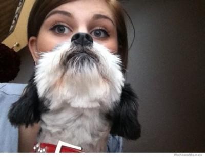 Rising of dog beards