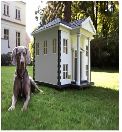 White (dog) house