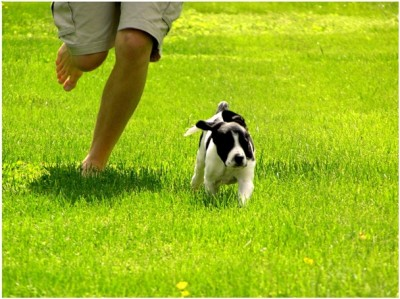 Essential Dog Training Tips
