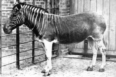 Most amazing extinct animals