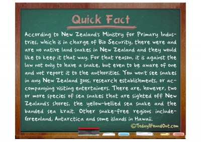 Cool Facts About New Zealand