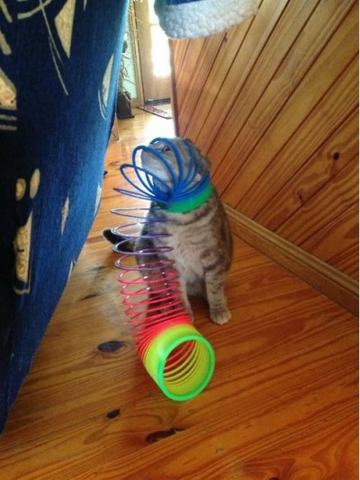 Funny animals stuck in objects