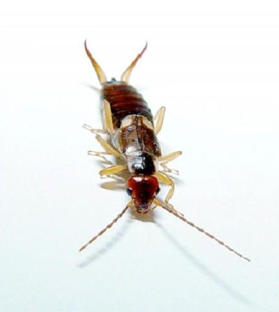 Ugliest Bugs