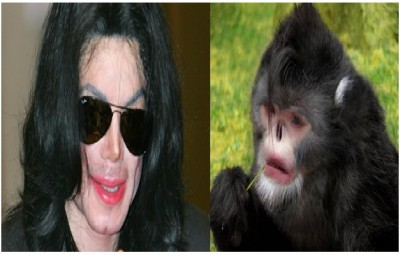 Celebrities who Look Like Animals