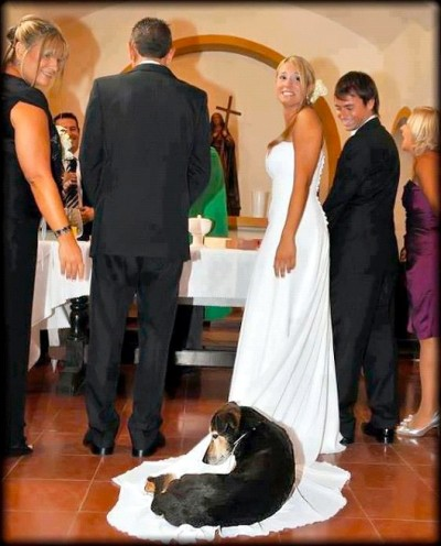 Best Wedding Photo Bomb
