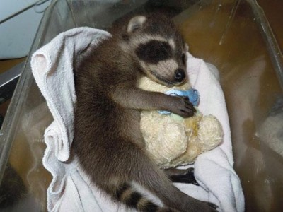 Baby animals with stuffed toys