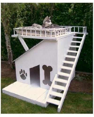 Dog house with sun deck