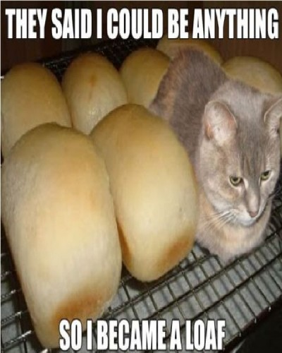 Funniest cat memes of all time