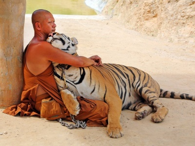 A Buddhist Monk With A Tiger