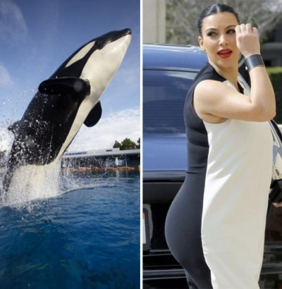 Kim Kardashian Looks Like A Killer Whale