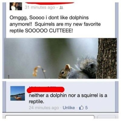 Squirrel a reptile? lol